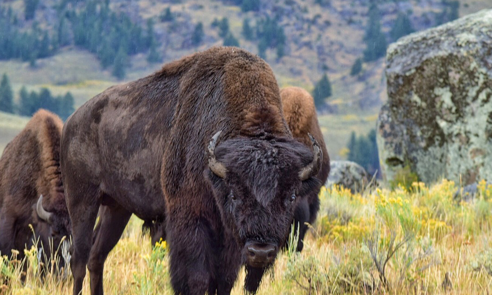 Best Instagram Photo Ops in America | Yellowstone